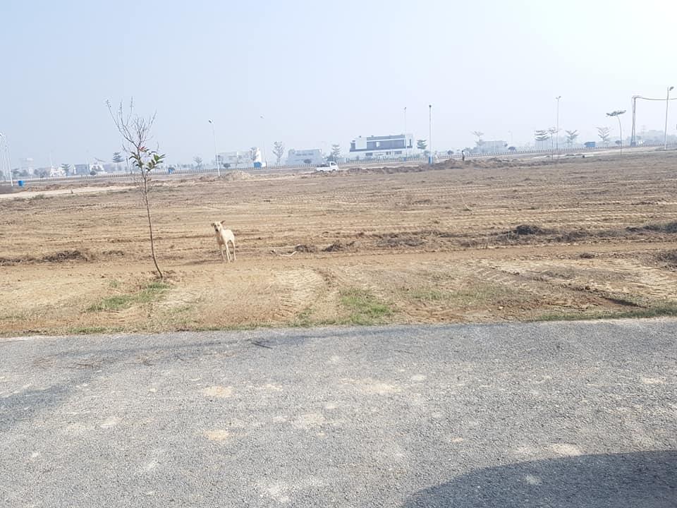 A-442 1 Kanal Plot in DHA Multan For Sale
